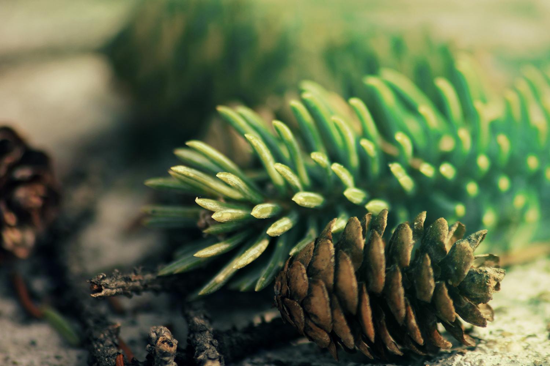 Zedernholz Fußgeruch Fußpilz